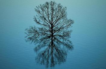 A társadalmi valóság tükröződése az alapjogi dogmatikában